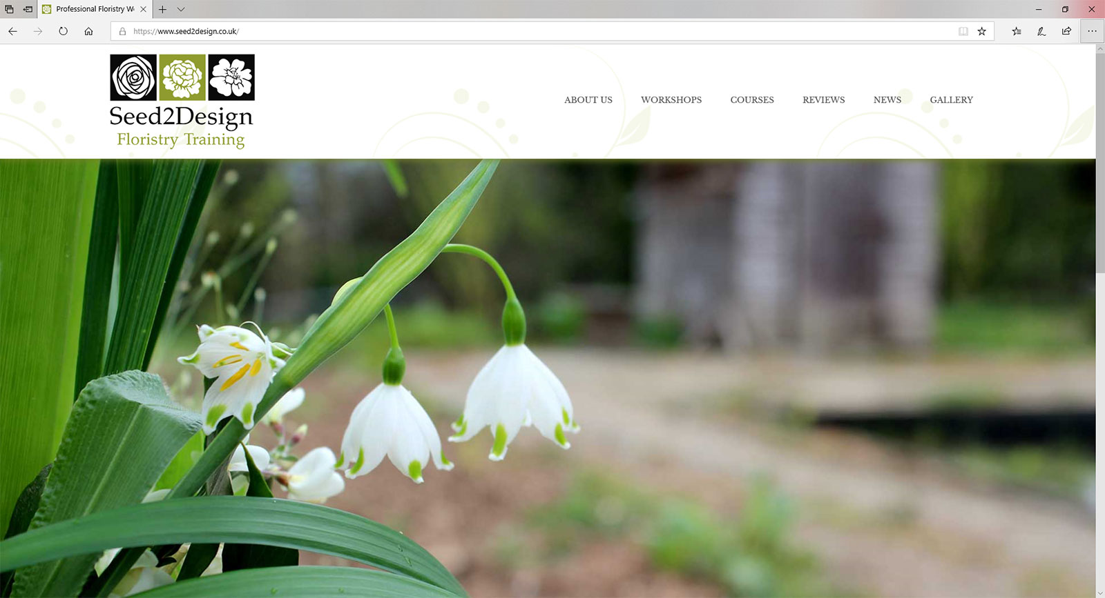 seed2design website design branding project